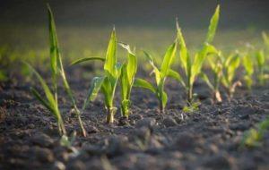 قیمت خرید تضمینی سه محصول کشاورزی تعیین شد