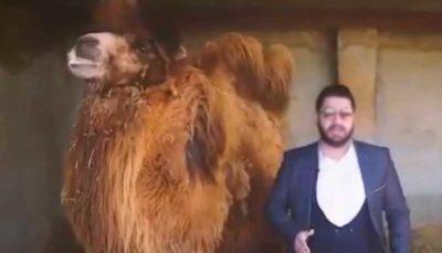 تبلیغ کننده مزایای نوشیدن ادرار شتر بازداشت شد