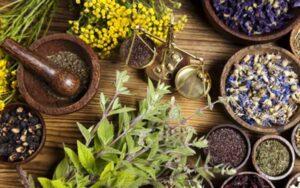 عصارههای گیاهی موثر برای درمان دیابت معرفی شد