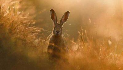 مسابقه عکاسی از طبیعت در سال ۲۰۲۰ /تصاویر