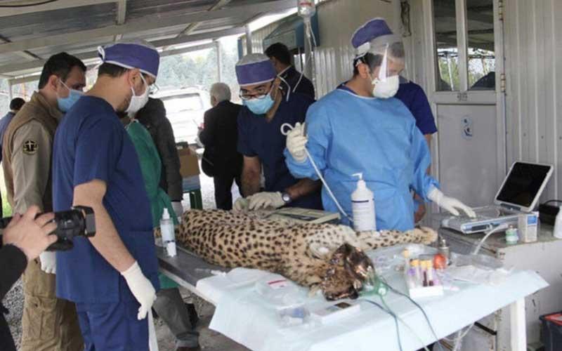 بازگشت دلبر و کوشکی به توران تحت تدابیر پزشکی! /تصاویر