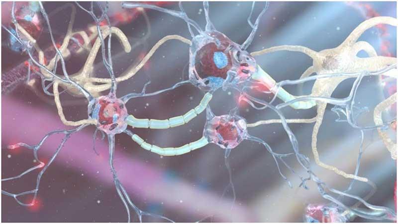 استارتاپی که با استفاده از نورونهای انسان تراشههای کامپیوتری میسازد