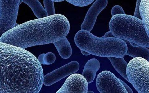 ارتباط عفونت های باکتریایی خون و سرطان روده