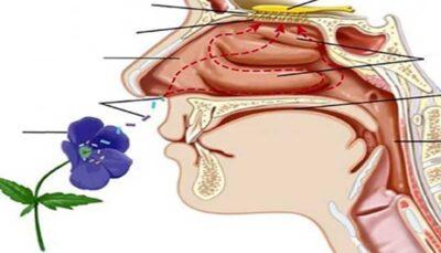 راههای بهبود حس بویایی