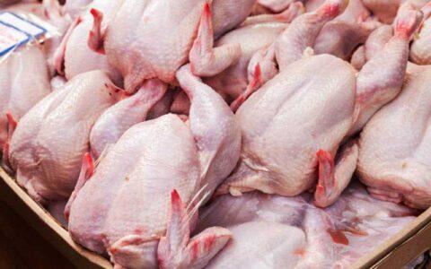 ممنوعیت قطعه کردن مرغ در فروشگاه ها؛ تخلفات را گزارش دهید