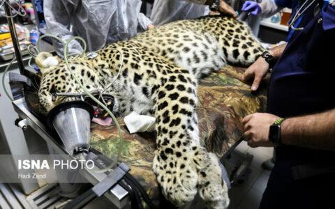 چالشهای پیش روی دامپزشکی حیات وحش در ایران