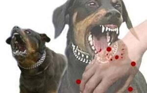بیماریهای قابل انتقال از سگها به انسان و چند نکته بهداشتی