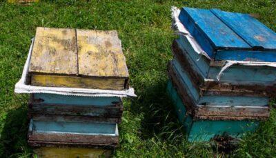 دامنههای رودبار میزبان زنبور های عسل در فصل بهار/فیلم
