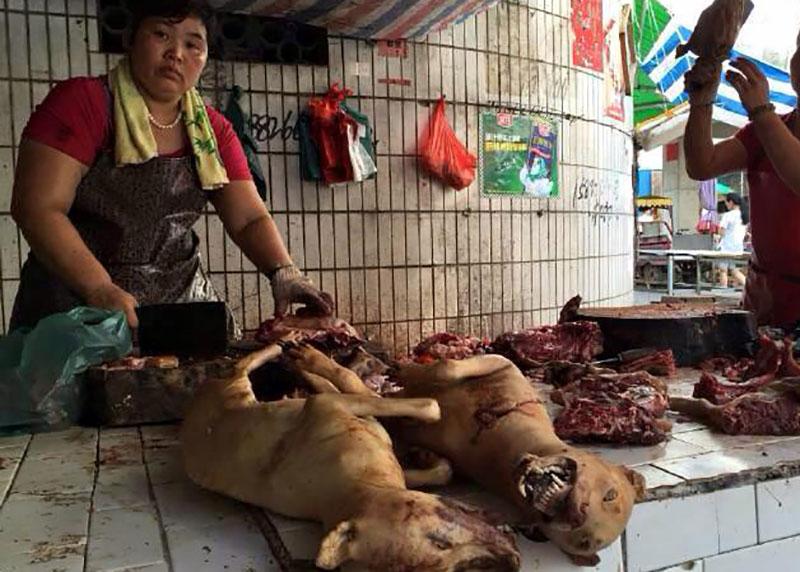 نمایشگاه سالانه گوشت سگ در چین! /تصاویر