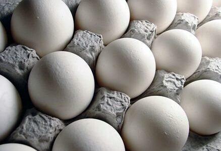 قیمت تخممرغ اعلام شد