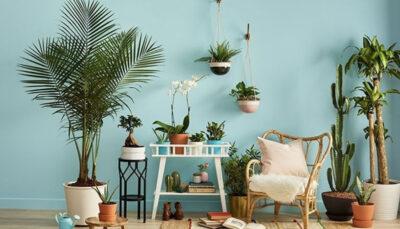 اثرات معجزهآسای گیاهان آپارتمانی بر سلامت گیاهان آپارتمانی, سلامت
