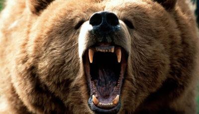 حمله خرس وحشی به زن پیرانشهری