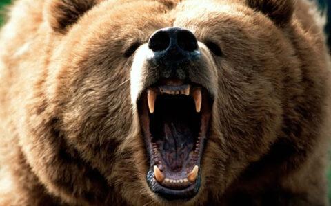 حمله خرس وحشی به زن پیرانشهری زنی ۴۵ ساله, روستای گزگسک منگور, حمله خرس