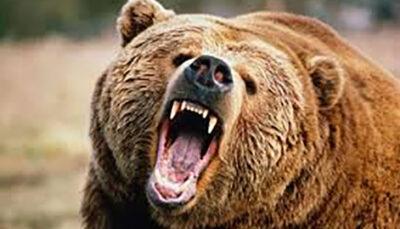 خوزستان؛ حمله خرس به یک جوان شکستگی, مصدومیت شدید, حمله خرس