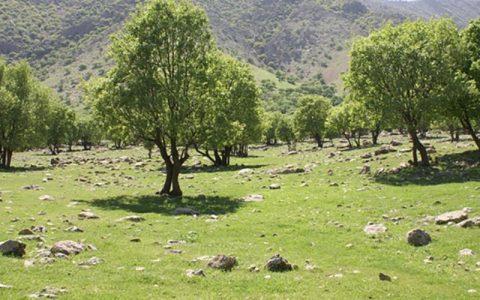 وزش باد شدید و گردوخاک در شرق کشور رعد و برق, وزش باد شدید, وضعیت جوی کشور