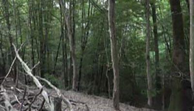 ۵۶۰۰ هکتار جنگل در اختیار یک شخص اراضی ملی, سازمان اوقاف