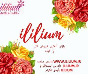 آی لیلیوم سفارش گل آنلاین در کوتاه ترین زمان اپلیکیشن, گل, آی لیلیوم