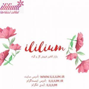 اپلیکیشن آی لیلیوم اپلیکیشن, گل, آی لیلیوم