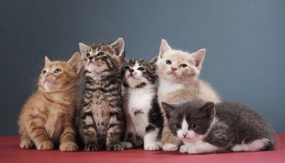 رعایت فاصله گذاری اجتماعی در بین گربه های تهرانی/ عکس