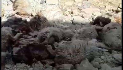 ریزش کوه ۱۴۰ رأس گوسفند یک دامدار را بلعید ریزش کوه, دامدار