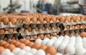 چرا قیمت تخممرغ به اوج رسید؟