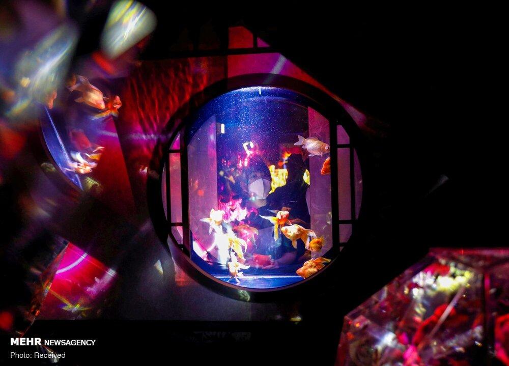 نمایش هزاران ماهی قرمز در نمایشگاه هنر آکواریوم ژاپن