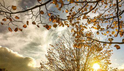 پاییز رنگی پاییز رنگی, تصاویر