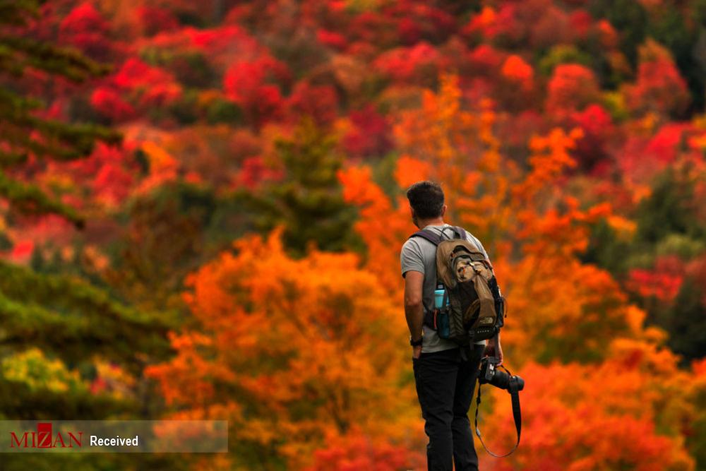 2802065 277 پاییز رنگی, تصاویر