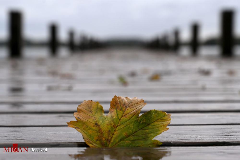2802067 329 پاییز رنگی, تصاویر