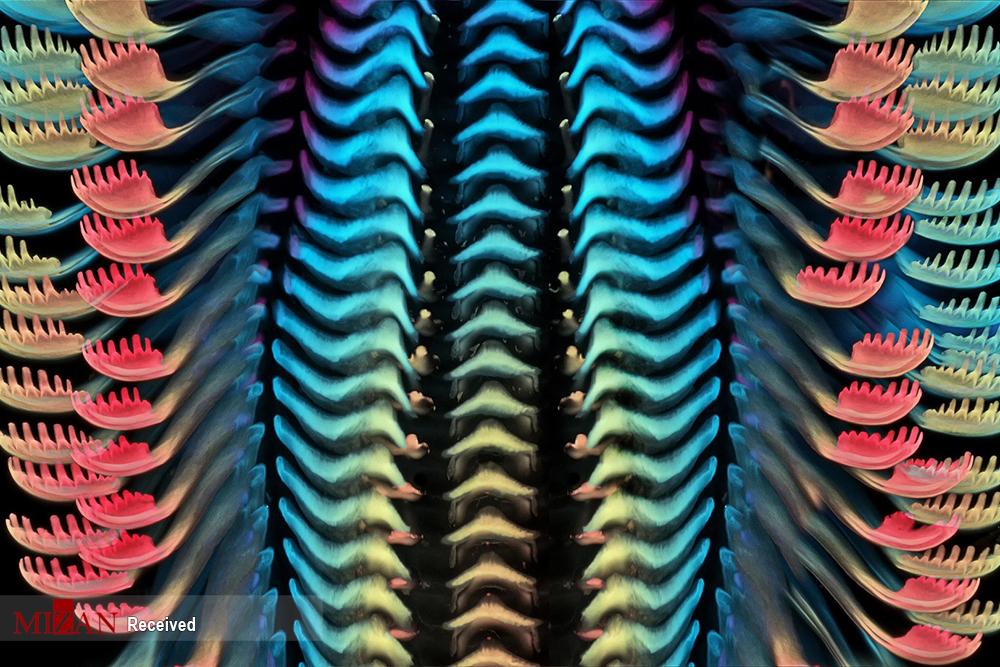 مسابقات فوتوماکروگرافی ۲۰۲۰