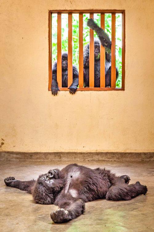 بهترین عکاسان اروپایی حیات وحش ۲۰۲۰