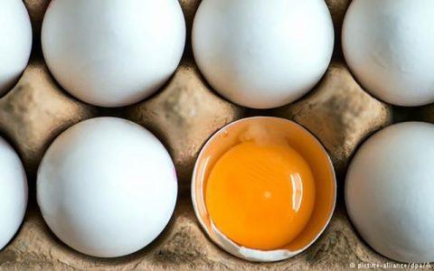 تخم مرغ شانهای ۳۶ هزار تومان قیمت تخم مرغ