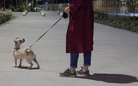 سگگردانی در بوستان ها مطابق مقررات جاری کشور ممنوع است
