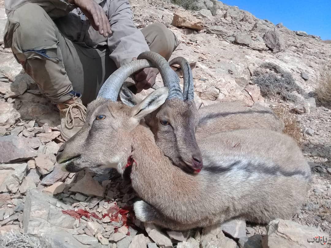 شکار غیرمجاز 7 قرق شکار, قرق های اختصاصی, شکار غیرمجاز
