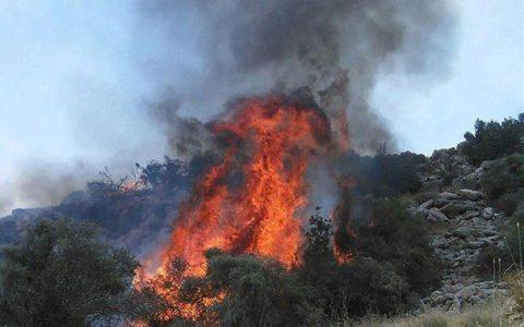 نیروهای امدادی از ۴ شهرستان به جنگلهای توسکستان اعزام شدند آتشسوزی درحال پیشروی جنگلهای توسکستان, آتشسوزی