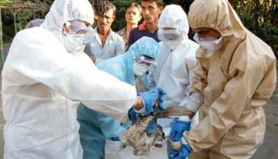 هشدار در خصوص خطر شیوع آنفلوآنزای فوق حاد پرندگان آنفلوآنزای فوق حاد پرندگان, شیوع آنفلوآنزا