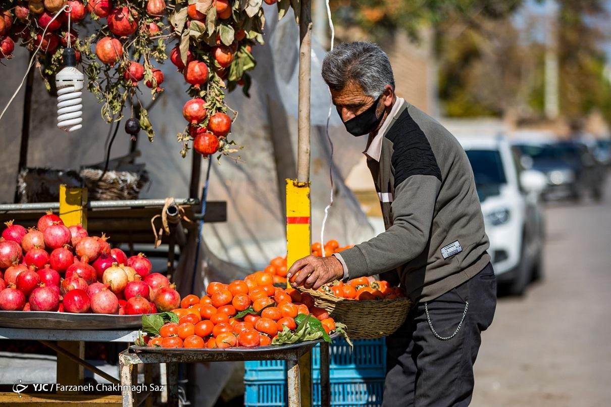 درختان خرمالوی کوچه باغهای شیراز
