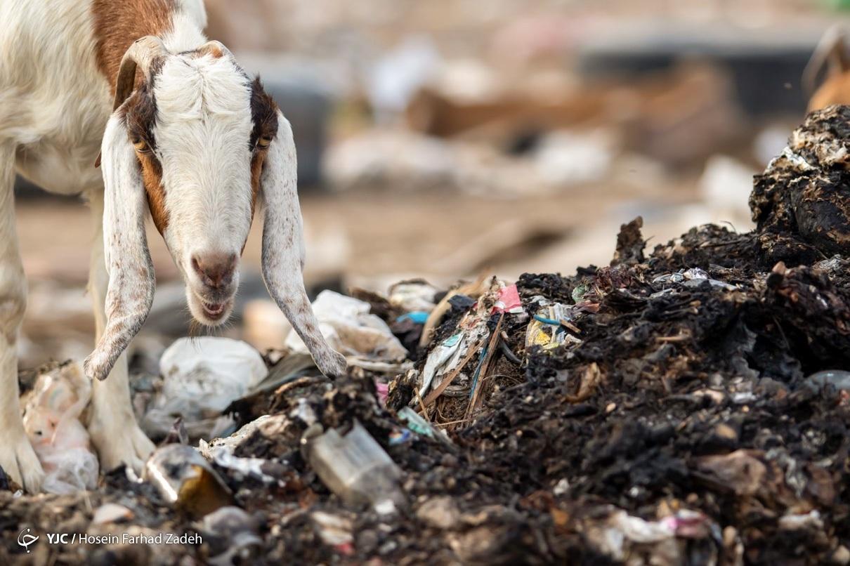 حیوانات اهلی گرفتار پسماند بیمارستانی - اهواز