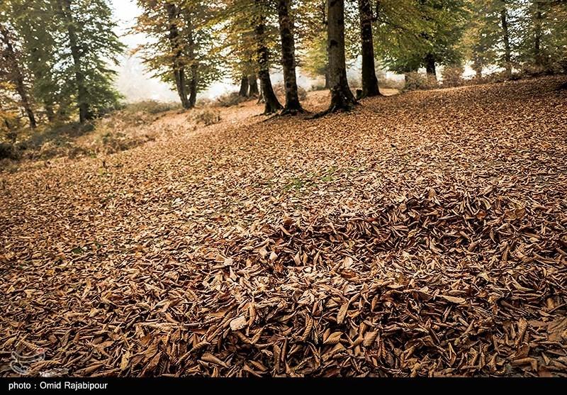 طبیعت پاییزی روستای اشکورات گیلان