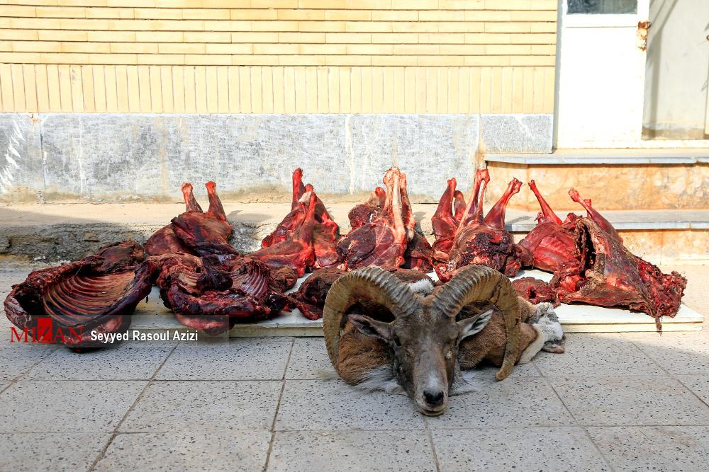 2840224 844 کلات, شکارچی غیرمجاز