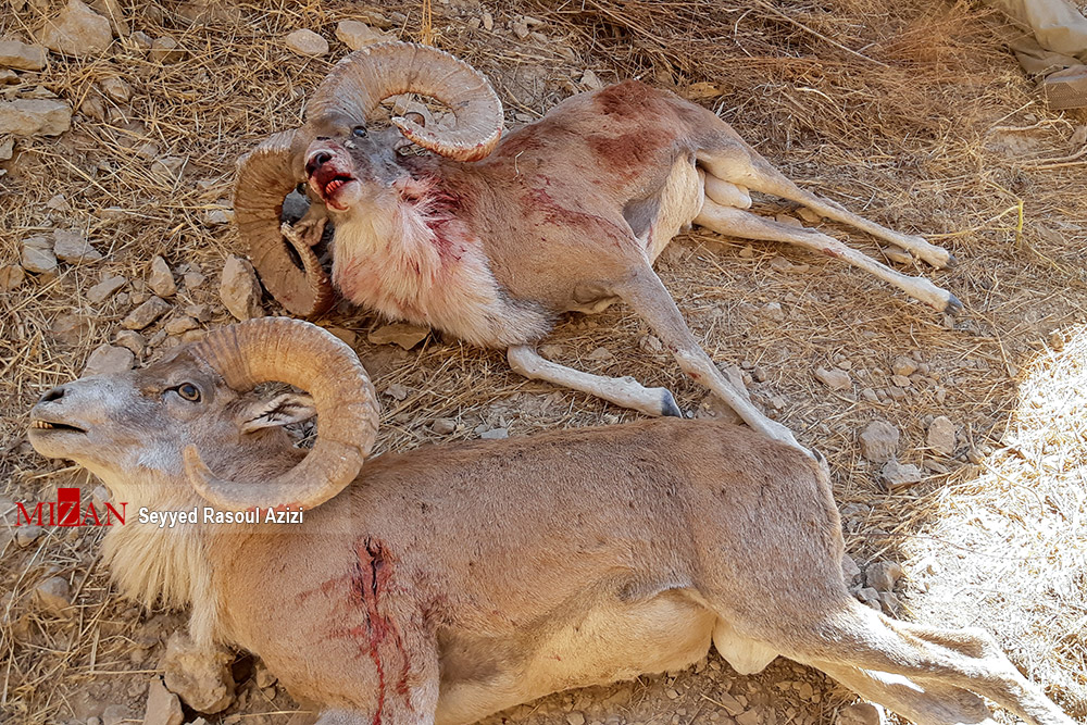 2840230 316 کلات, شکارچی غیرمجاز