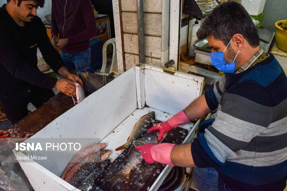 61789304 بازار ماهی فریدونکنار