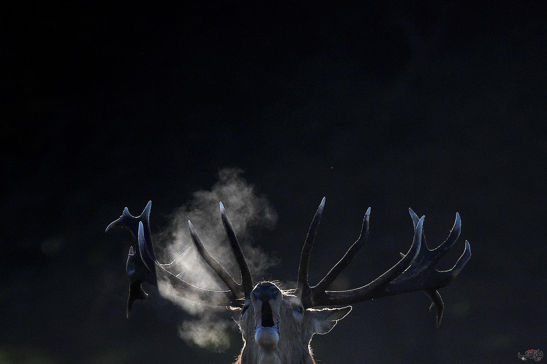 Male Deer Breeding London 2020 10 11T135742Z 1243186228 RC2BGJ9WVC4C RTRMADP 3 BRITAIN NATURE برترین عکس های رسانه ای جهان, بهترین عکس خبری, بهترین عکس های جهان, گزارش تصویری