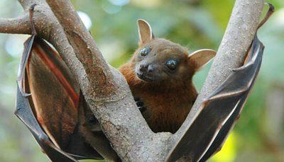 شیوع یک ویروس دیگر از خفاشها برای اولین بار در اروپا ویروس ایسیک-کول, ویروس, اروپا