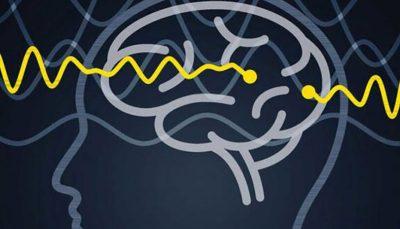 کشف یک مکانیسم جدید اتصال در مغز انسان