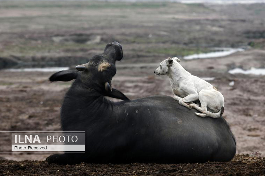 1 همزیستی حیوانات, دنیای حیوانات
