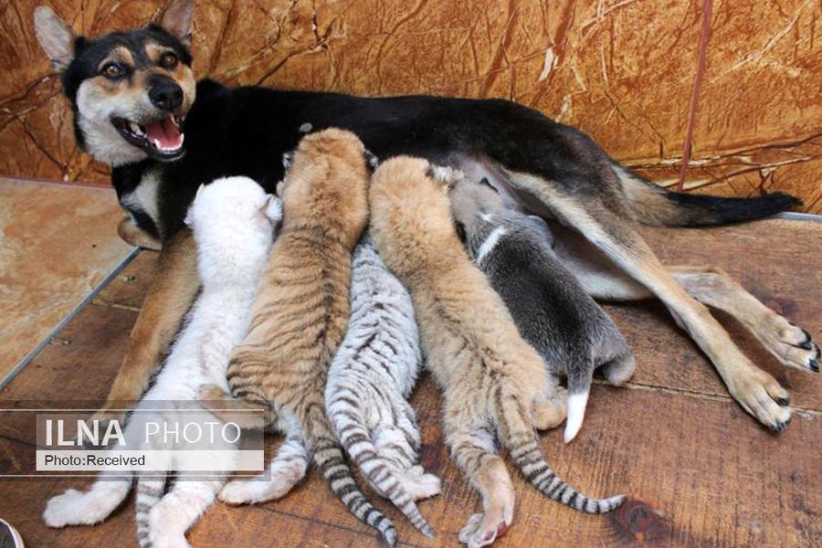 12 همزیستی حیوانات, دنیای حیوانات