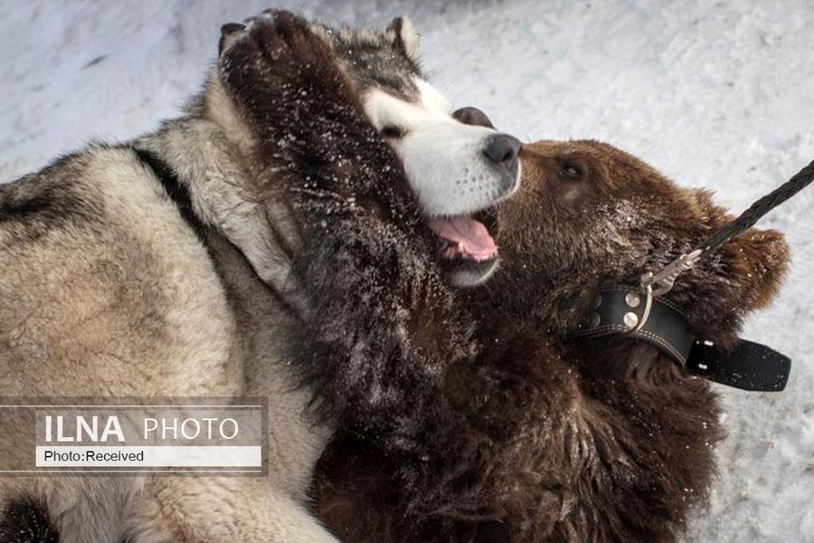 14 همزیستی حیوانات, دنیای حیوانات