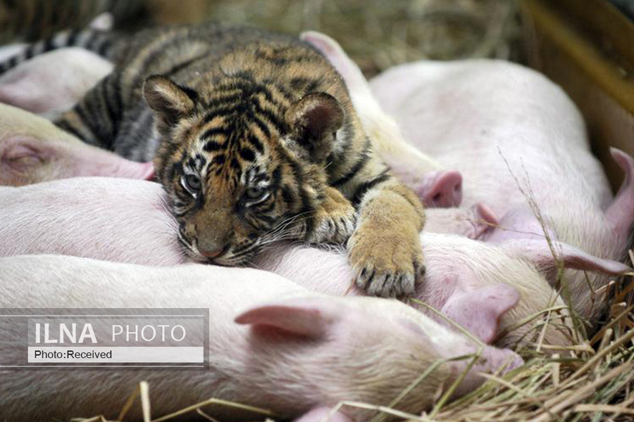 17 همزیستی حیوانات, دنیای حیوانات