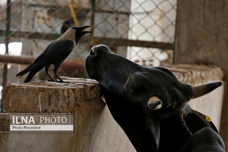 19 همزیستی حیوانات, دنیای حیوانات